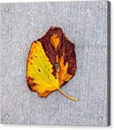 Leaf On Granite 5 - Square Acrylic Print