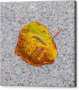 Leaf On Granite 6 - Square Acrylic Print
