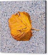 Leaf On Granite 7 - Square Acrylic Print