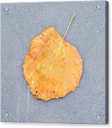 Leaf On Granite 9 - Square Acrylic Print