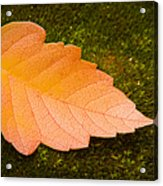 Leaf On Moss Acrylic Print by Adam Romanowicz