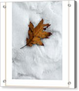 Leaf On Snow Poster Acrylic Print