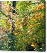 Leaf Path  Acrylic Print