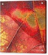 Leaf Pattern_1 Acrylic Print