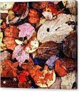Leaf Patterns 2 Acrylic Print