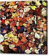 Leaf Patterns 3 Acrylic Print