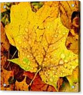 Leaf Portait 1 Acrylic Print