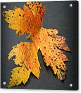 Leaf Portrait Acrylic Print