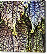 Leaf Series 15 Acrylic Print
