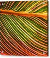 Leafscape 2 Acrylic Print