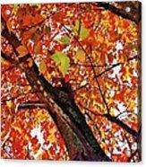 Leafward Acrylic Print