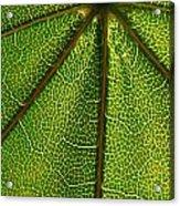 Leafy Green Acrylic Print
