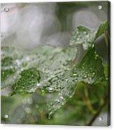 Leafy Raindrops Acrylic Print
