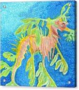 Leafy Seadragon Acrylic Print