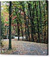 Leafy Trail Acrylic Print
