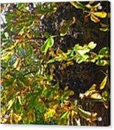 Leafy Tree Bark Image Acrylic Print
