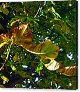 Leafy Tree Image Acrylic Print