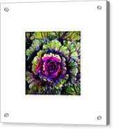 Leafy_09.29.12 Acrylic Print