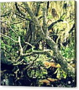 Leaning Branches Acrylic Print