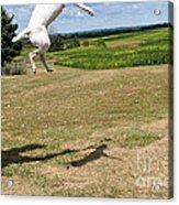 Leap Higher Acrylic Print