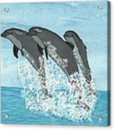Leaping Dolphins Acrylic Print