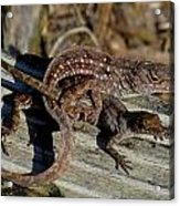 Leaping Lizards Acrylic Print