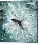 Leaping Salmon Acrylic Print