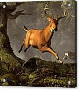 Leaping Stag Acrylic Print