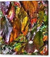 Leaves 1 Acrylic Print