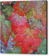 Leaves 2 Acrylic Print