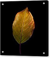 Leaves - A Golden Trio Acrylic Print by James Hammen
