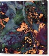 Leaves Abstraction IIi Acrylic Print