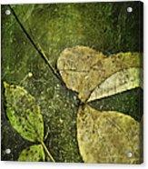 Leaves Afloat Acrylic Print