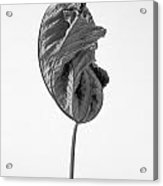 Leaves After Life - Nineteen Acrylic Print