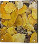 Leaves Alone Acrylic Print