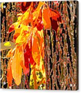 Leaves And Bark Acrylic Print