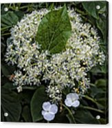 Leaves And Flowers Acrylic Print