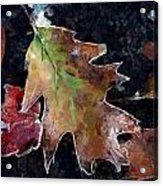 Leaves And Frost Acrylic Print