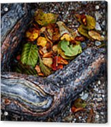 Leaves And Root Acrylic Print