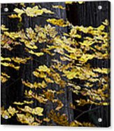 Leaves And Trees Acrylic Print