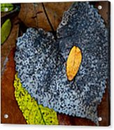 Leaves At Oak Openings Acrylic Print