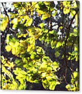 Leaves Blowing Acrylic Print