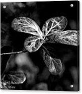 Leaves - Bw Acrylic Print