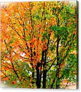 Leaves Changing Colors Acrylic Print