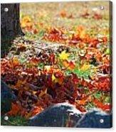 Leaves Falling Acrylic Print