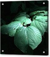 Leaves In A Patch Of Sunlight Acrylic Print