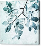 Leaves In Dusty Blue Acrylic Print