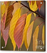 Leaves In Fall Acrylic Print