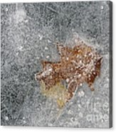 Leaves In Ice Acrylic Print