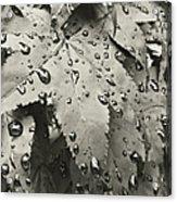 Leaves In Rain Acrylic Print
